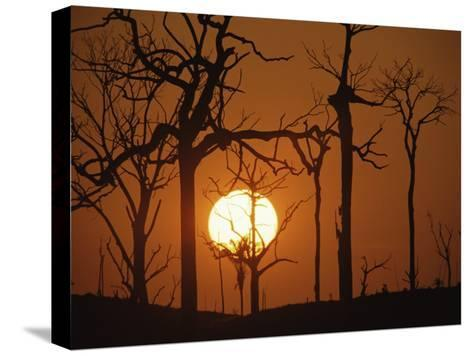 Sunset in Tropical Rainforest after Destruction by Fire, Brazil-Martin Dohrn-Stretched Canvas Print