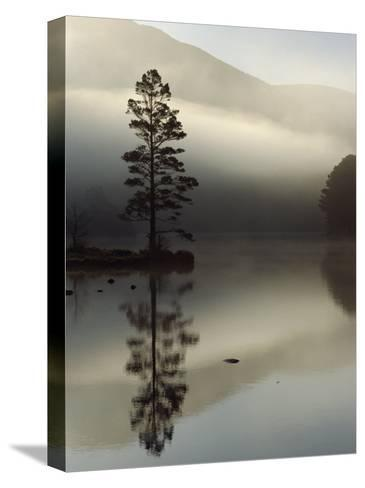 Scots Pine Tree Reflected in Lake at Dawn, Loch an Eilean, Scotland, UK-Pete Cairns-Stretched Canvas Print