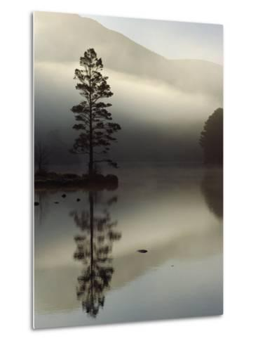 Scots Pine Tree Reflected in Lake at Dawn, Loch an Eilean, Scotland, UK-Pete Cairns-Metal Print