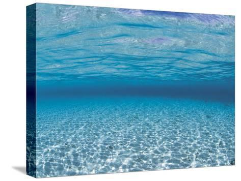 Sandy Seabed Underwater View, Indo-Pacific-Jurgen Freund-Stretched Canvas Print