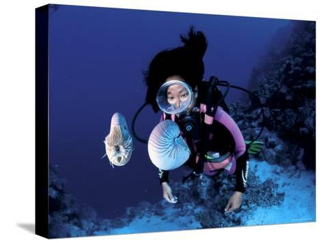 Diver with Pair of Pearly Nautilus, Great Barrier Reef, Queensland, Australia-Jurgen Freund-Stretched Canvas Print