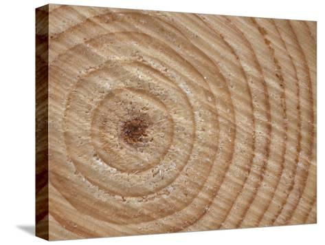 Growth Rings in Trunk of Spruce Tree, Norway-Pete Cairns-Stretched Canvas Print