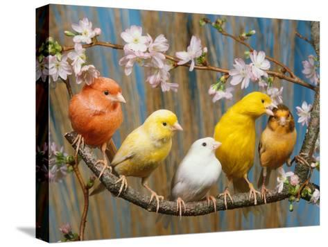 Five Canaries of Different Colours-Reinhard-Stretched Canvas Print