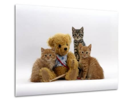 Domestic Cat, Two Ginger Kittens and a Tabby with Ginger Teddy Bear-Jane Burton-Metal Print