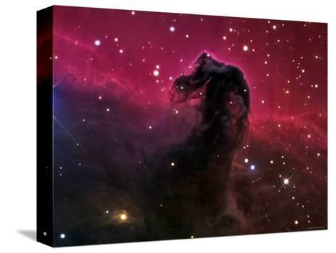 The Horsehead Nebula-Stocktrek Images-Stretched Canvas Print