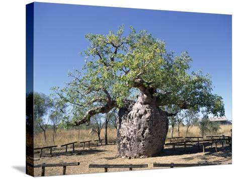 Old Hollow Boab Tree, Outside Derby, Western Australia, Australia-Richard Ashworth-Stretched Canvas Print