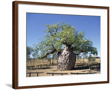 Old Hollow Boab Tree, Outside Derby, Western Australia, Australia-Richard Ashworth-Framed Art Print