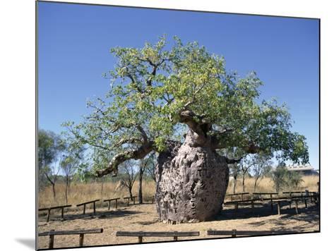 Old Hollow Boab Tree, Outside Derby, Western Australia, Australia-Richard Ashworth-Mounted Photographic Print
