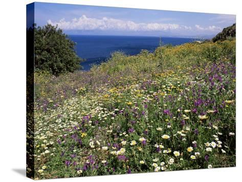 April Spring Flowers, Zingaro Nature Reserve, Northwest Area, Island of Sicily, Italy-Richard Ashworth-Stretched Canvas Print