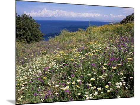 April Spring Flowers, Zingaro Nature Reserve, Northwest Area, Island of Sicily, Italy-Richard Ashworth-Mounted Photographic Print