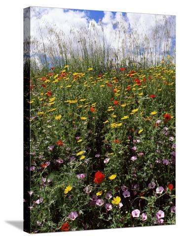 April Spring Flowers, Near Aidone, Central Area, Island of Sicily, Italy, Mediterranean-Richard Ashworth-Stretched Canvas Print