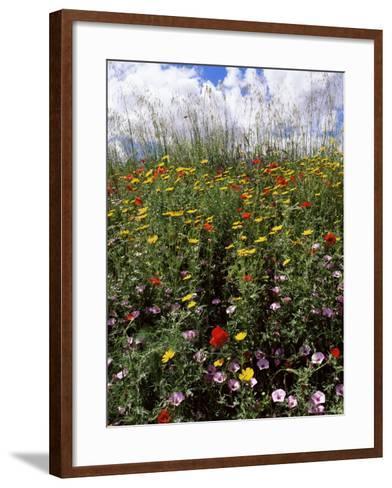 April Spring Flowers, Near Aidone, Central Area, Island of Sicily, Italy, Mediterranean-Richard Ashworth-Framed Art Print