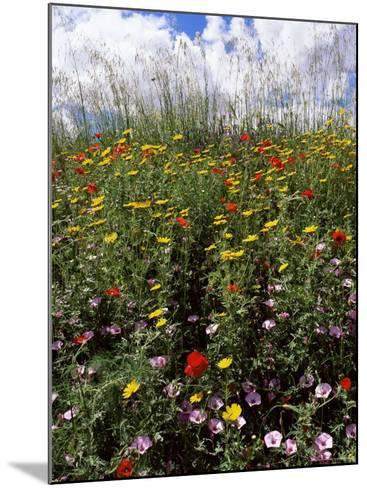 April Spring Flowers, Near Aidone, Central Area, Island of Sicily, Italy, Mediterranean-Richard Ashworth-Mounted Photographic Print