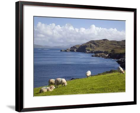Sheep Grazing by Rugged Coastline of Coulagh Bay on Ring of Beara Tourist Route-Pearl Bucknall-Framed Art Print