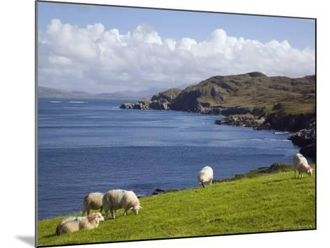 Sheep Grazing by Rugged Coastline of Coulagh Bay on Ring of Beara Tourist Route-Pearl Bucknall-Mounted Photographic Print