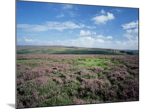 Heather on the Moors, North Yorkshire, England, United Kingdom-Jean Brooks-Mounted Photographic Print