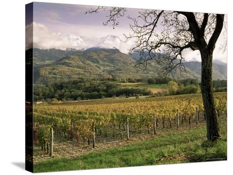 Vineyards Near Chambery, Savoie, Rhone Alpes, France-Michael Busselle-Stretched Canvas Print