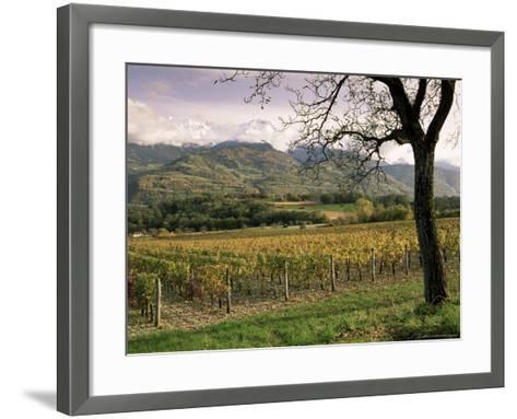 Vineyards Near Chambery, Savoie, Rhone Alpes, France-Michael Busselle-Framed Art Print
