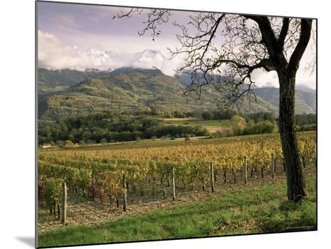 Vineyards Near Chambery, Savoie, Rhone Alpes, France-Michael Busselle-Mounted Photographic Print