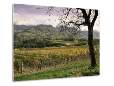 Vineyards Near Chambery, Savoie, Rhone Alpes, France-Michael Busselle-Metal Print