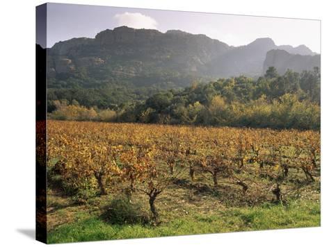 Vineyards Near Roquebrun Sur Argens, Var, Provence, France-Michael Busselle-Stretched Canvas Print