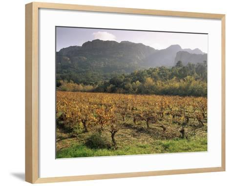 Vineyards Near Roquebrun Sur Argens, Var, Provence, France-Michael Busselle-Framed Art Print
