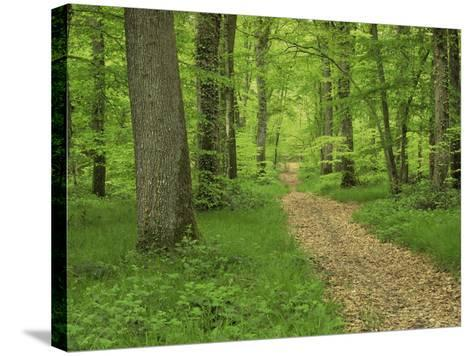 Forest of Chambord, Loir Et Cher, Loire Centre, France-Michael Busselle-Stretched Canvas Print