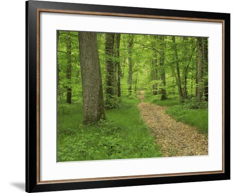 Forest of Chambord, Loir Et Cher, Loire Centre, France-Michael Busselle-Framed Art Print