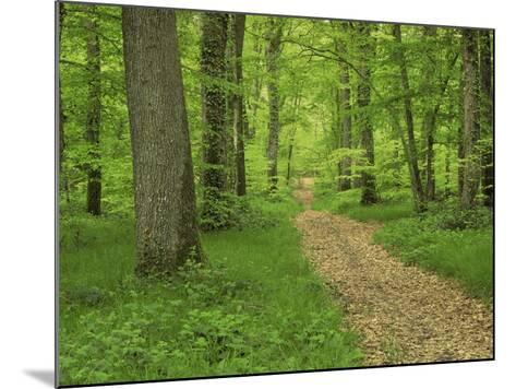 Forest of Chambord, Loir Et Cher, Loire Centre, France-Michael Busselle-Mounted Photographic Print
