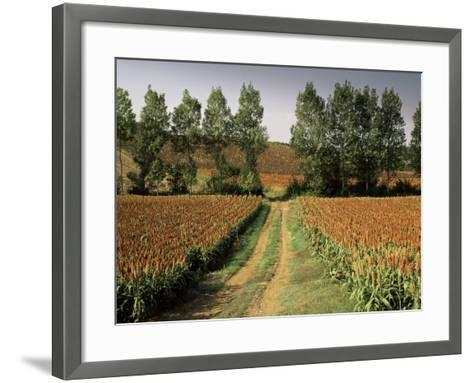 Millet Field Near Condom, Gascony, Midi-Pyrenees, France-Michael Busselle-Framed Art Print