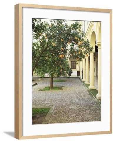 Orange Tree in Courtyard, Cordoba, Andalucia, Spain-Rob Cousins-Framed Art Print