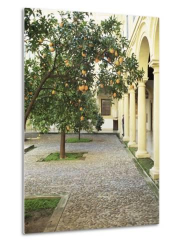 Orange Tree in Courtyard, Cordoba, Andalucia, Spain-Rob Cousins-Metal Print