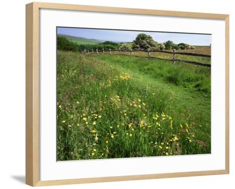 South Downs Way Near East Dean, East Sussex, England, United Kingdom-Kathy Collins-Framed Art Print