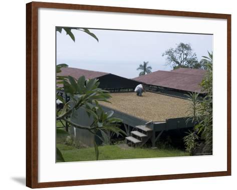 Kona Coffee Beans Drying in the Sun, Greenwell Coffee Plantation, Kona, Hawaii-Ethel Davies-Framed Art Print