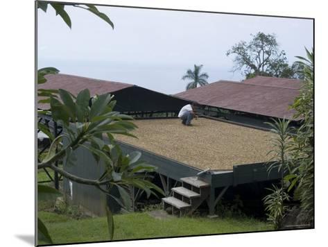 Kona Coffee Beans Drying in the Sun, Greenwell Coffee Plantation, Kona, Hawaii-Ethel Davies-Mounted Photographic Print