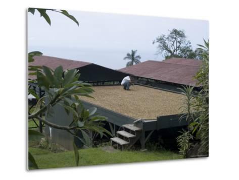 Kona Coffee Beans Drying in the Sun, Greenwell Coffee Plantation, Kona, Hawaii-Ethel Davies-Metal Print