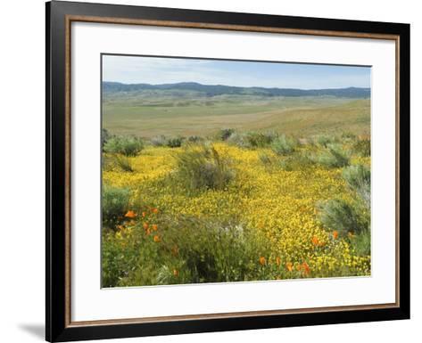 Antelope Valley Poppy Reserve, California, USA-Ethel Davies-Framed Art Print