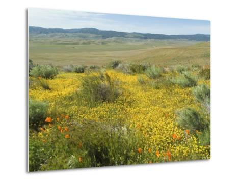 Antelope Valley Poppy Reserve, California, USA-Ethel Davies-Metal Print