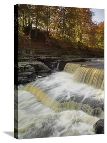 Lower Aysgarth Falls and Autumn Colours Near Hawes, Yorkshire Dales National Park, Yorkshire-Neale Clarke-Stretched Canvas Print