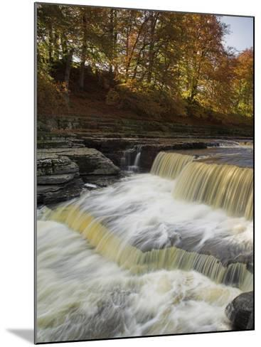 Lower Aysgarth Falls and Autumn Colours Near Hawes, Yorkshire Dales National Park, Yorkshire-Neale Clarke-Mounted Photographic Print