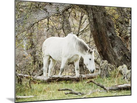 Wild Horses, El Calafate, Patagonia, Argentina, South America-Mark Chivers-Mounted Photographic Print