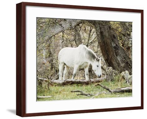 Wild Horses, El Calafate, Patagonia, Argentina, South America-Mark Chivers-Framed Art Print
