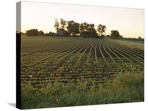 Soy Bean Field, Hudson, Illinois, Midwest, USA-Ken Gillham-Stretched Canvas Print