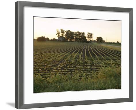 Soy Bean Field, Hudson, Illinois, Midwest, USA-Ken Gillham-Framed Art Print