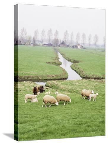 Sheep and Farms on Reclaimed Polder Lands Around Amsterdam, Holland-Walter Rawlings-Stretched Canvas Print