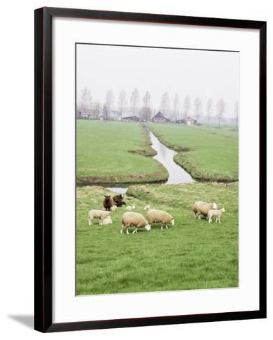 Sheep and Farms on Reclaimed Polder Lands Around Amsterdam, Holland-Walter Rawlings-Framed Art Print