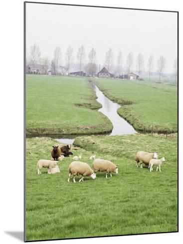 Sheep and Farms on Reclaimed Polder Lands Around Amsterdam, Holland-Walter Rawlings-Mounted Photographic Print