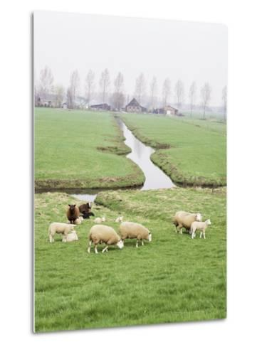 Sheep and Farms on Reclaimed Polder Lands Around Amsterdam, Holland-Walter Rawlings-Metal Print
