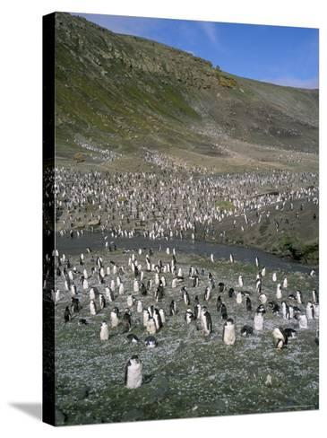 Chinstrap Penguins at Baily Head, Deception Island, Antarctica, Polar Regions-Geoff Renner-Stretched Canvas Print
