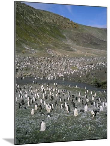 Chinstrap Penguins at Baily Head, Deception Island, Antarctica, Polar Regions-Geoff Renner-Mounted Photographic Print